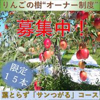 青森県弘前市相馬から「りんごの樹」オーナー募集中!【葉とらずサンつがるコース】
