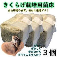 【送料無料】【熊本県産】きくらげ栽培用菌床(3個)