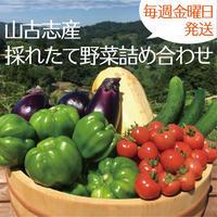 秋野菜詰め合わせセット  (山古志かぐらなんばん入り)