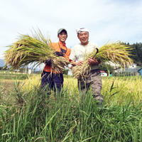 【毎月お届け!定期便】2020年 へんぺさんちのお米「こしひかり」 ~玄米5kg~