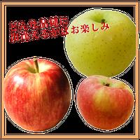 旬りんご 3kg箱