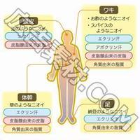 【イラスト図解・特典付き】女性の体臭解消アフィリエイトブログを作る記事セット!(29400文字)
