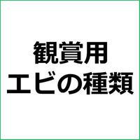 「ミナミヌマエビ」紹介記事テンプレート!