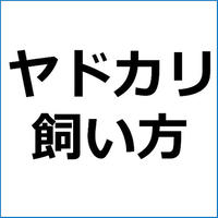 「水槽の選び方」ペットアフィリエイト記事テンプレート!