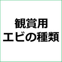 「ホワイトグローブシュリンプ」紹介記事テンプレート!