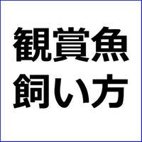 「初心者向け観賞魚・熱帯魚の基本的飼い方」ペットアフィリエイト記事テンプレート!