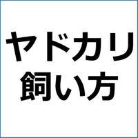 「初心者にもできる!ヤドカリの飼い方」ペットアフィリエイト記事テンプレート!
