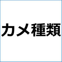 「チリメンナガクビガメ」紹介記事テンプレート!
