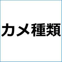 「カブトニオイガメ」紹介記事テンプレート!