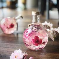 (再販) 桜のハーバリウム