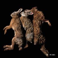 ノウサギ(野兎)【送料着払い】