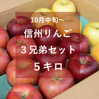 信州りんご3兄弟セット5キロ