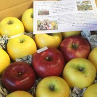 【全6回】りんご定期便10キロコース(送料込み※)