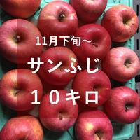 サンふじ10キロ