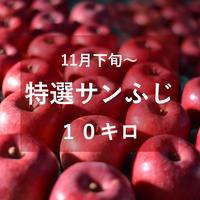 特選サンふじ(中・大玉)10キロ