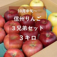 信州りんご3兄弟セット3キロ