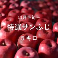 特選サンふじ(中・大玉)5キロ