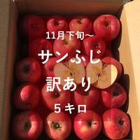 サンふじ(訳あり)5キロ