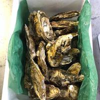 北海道産 寿牡蠣 大20個入り