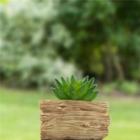 ソーラー植木鉢 肉質形状ソーラーライト デスクライト プレゼントにも