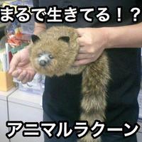 アニマルラクーン【G0144】The Funny Robbie Raccoon