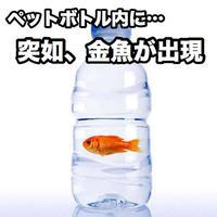 フィッシュ・イン・ア・ボトル【G1163】Fish In A Bottle