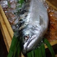 【生鮮】サツキマス(42-46cm)1尾 ※5月のみ