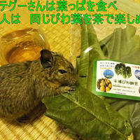 ペット、小動物用のおやつ用  びわの葉 「びわの葉まるっぼ」  20g