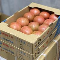 ますりぃ!国内送料込価格★旨い!サウナトマト1ケース★豊洲で一番サウナを知り尽くした男【ますりぃ】がその時期最高の産地を選びました。サウナ上がりにジューシートマト。冷やして丸かじり!