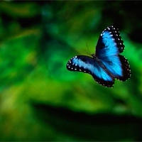 【音声】『蝶形骨の解放と呼吸法の基礎(究極のリラックス)』