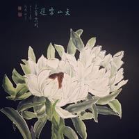幻の薬草『天山雪蓮(極上野生品)』