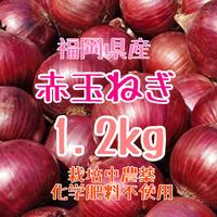 赤玉ねぎ1.2kg箱いっぱい詰めます.紫玉ねぎ.栽培中農薬化学肥料不使用【九州・福岡県産】