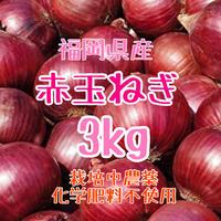 赤玉ねぎ3kg.紫玉ねぎ.栽培中農薬化学肥料不使用【九州・福岡県産】
