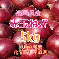 赤玉ね箱込5kg.紫玉ねぎ.栽培中農薬化学肥料不使用【九州・福岡県産】