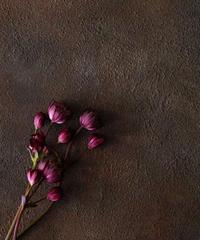 60サイズ:繊細な錆び色ブラウンブラック beautiful-rustic