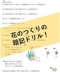 【PDF】花のつくり(被子・裸子)の暗記ドリル