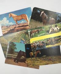 Animal Six Postcards
