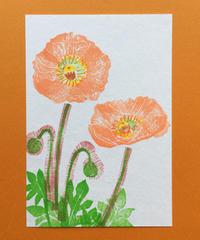 Post Card_ ポピー2         【 Hand Print card_ poppy02 】