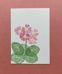 Post Card_ サクラソウ         【 Hand Print card_ primrose 】