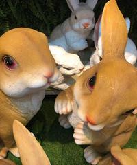 茶ウサギ大