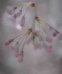 5名様限定神社仏閣写真教室〜比叡山延暦寺編〜2020/04/12