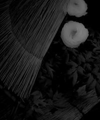 5名様限定神社仏閣写真教室〜鎌倉編〜2020/03/03