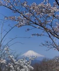 2名様限定神社仏閣写真教室〜富士浅間神社巡り編〜2021/04/20〜22