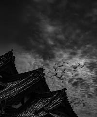 5名様限定神社仏閣写真散歩〜鎌倉編〜2020/01/17
