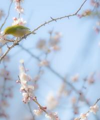 3名様限定神社仏閣写真教室〜伊豆神社巡り編〜2021/02/24〜26