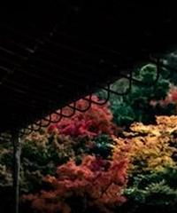 3名様限定神社仏閣写真教室〜京都編〜2020/11/27