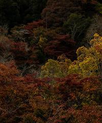 Japan vol.15