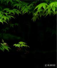 4名様限定神社仏閣写真教室〜京都編〜2020/06/16