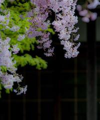 5名様限定神社仏閣写真教室〜奈良編〜2020/04/10