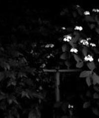 3名様限定神社仏閣写真教室〜鎌倉編〜2020/06/29